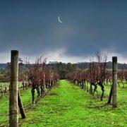 Jingalla-Wines