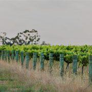 Lange Estate Wine