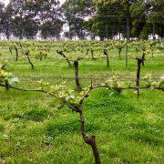 Oranje Tractor Wines 2