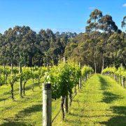Silverstream Wines